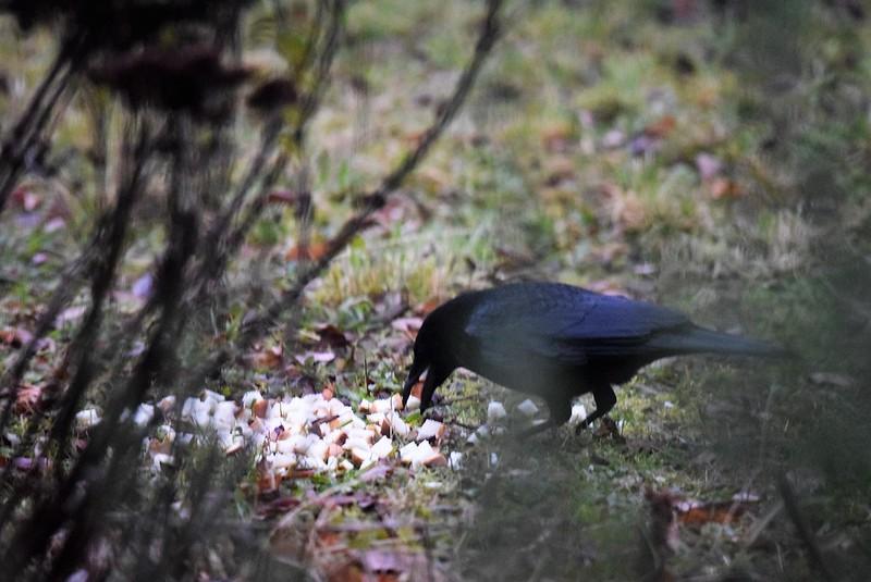 Crow 10.12 (7)