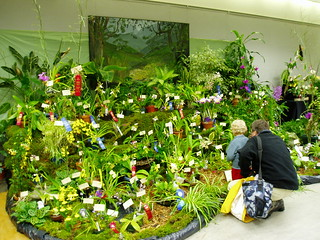 Orchid Show with Child | by RHR Horticulture