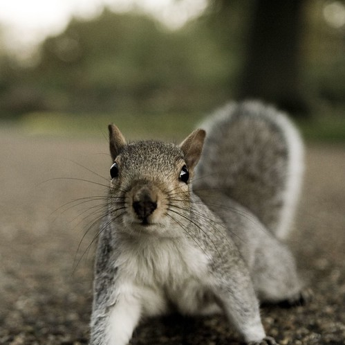A Little squirrel in Hyde Park | by Simon Grossi