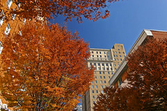 Autumn in downtown Winston-Salem | by Brian Leon of Ottawa