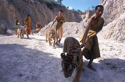 Monks and Tigers | by Photography School Asia