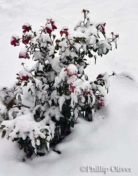 snow121516c