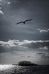 uk_brighton_burnt-pier_seagull_tall | by wvs