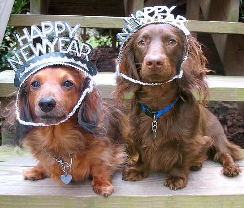 Happy New Year - Doggy Style | by Doxieone