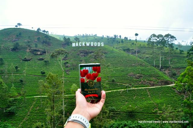 A Small Box of Mackwoods Tea