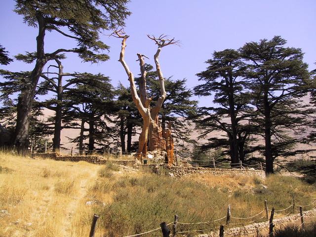 Bcharre Cedars, Lebannon