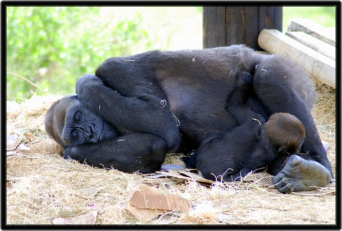 I can't hear you...let me sleep | by Arkansas ShutterBug