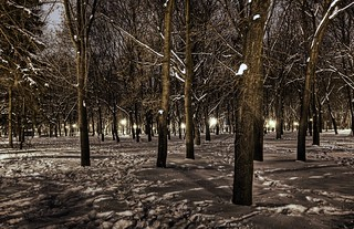 Snowy Forest of Kharkov | by Stuck in Customs