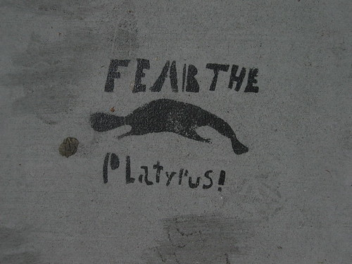 fear_the_platypus | by Salim Virji