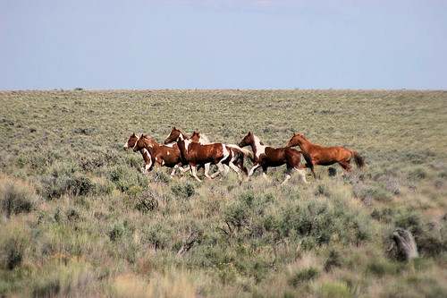 Wild horses | by Doug Goodenough