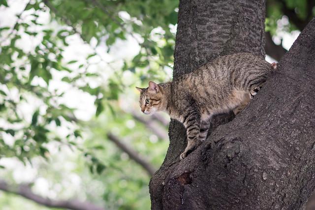 木に登ったネコ