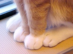 Close Up of Orange & White Cat Paws ~ Reached 20,000+  Views | by Pixel Packing Mama