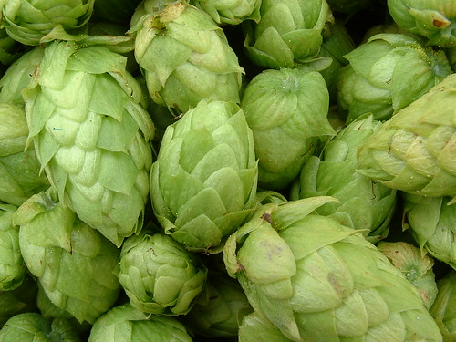 Hops close-up 1 (Cascade) | by sequoianorcal