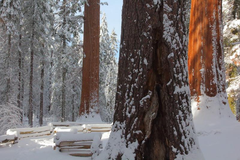 IMG_7105 Tuolumne Grove of Giant Sequoias