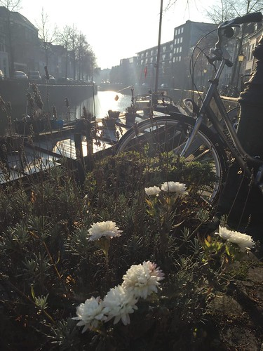 winter canal harbour Holland Dutch Birman