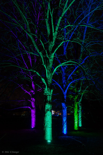Illumination 2016 Trees 02
