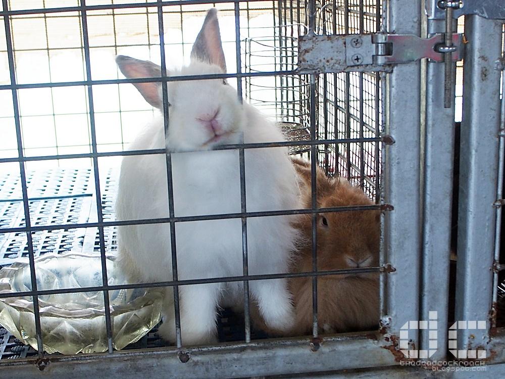 animal corner, farm, farm tour, farmart centre, singapore,where to go in singapore, 农市中心, 農市中心, review,farmart,rabbit,bunny