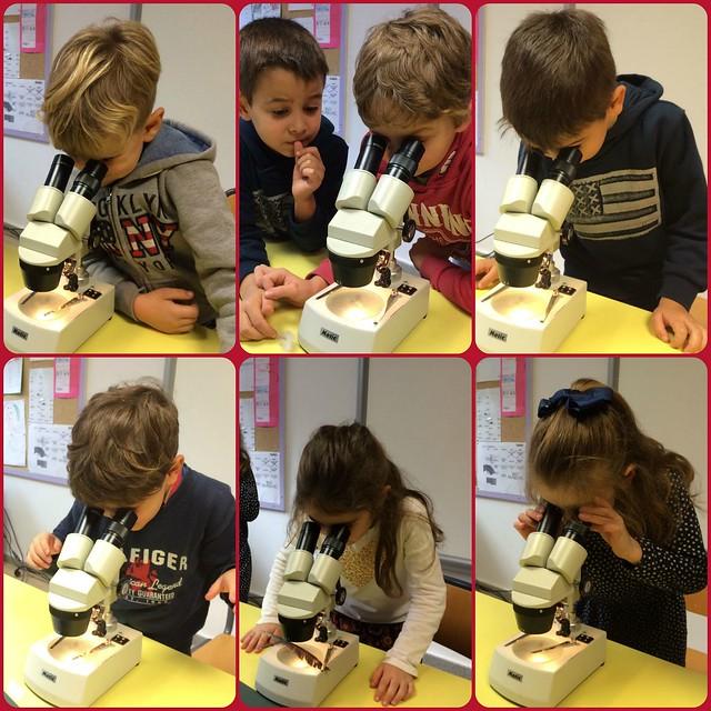 foto microscopio 1