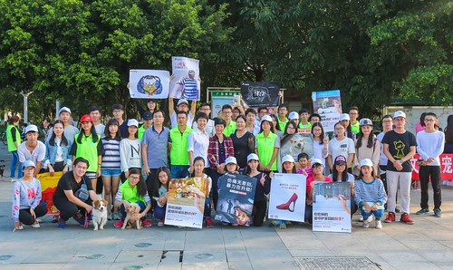 """No to cat and dog meat"" posters"