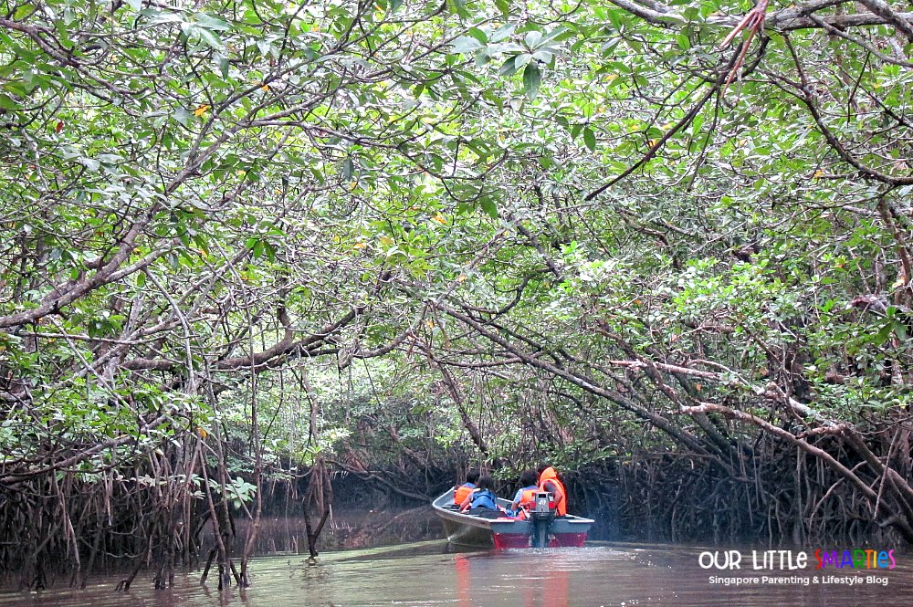 Into the mangrove 2