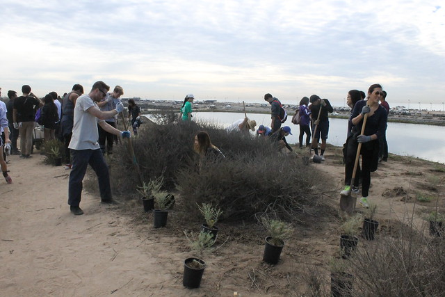 Fall 2016: Bolsa Chica Volunteer Event