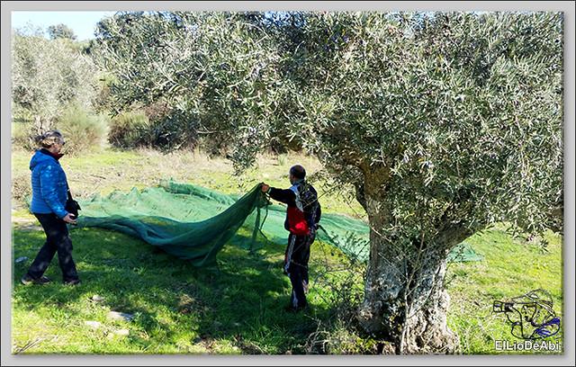 Un día en Ahigal de los Aceiteros haciendo oleoturismo 9