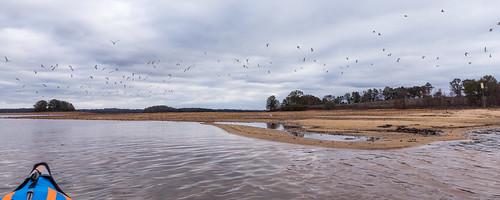 Sea gulls - 3