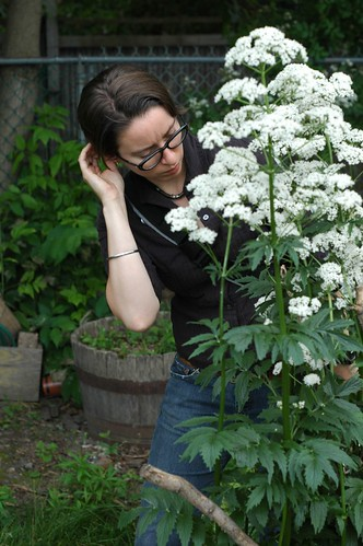 white valerian | by yougrowgirl