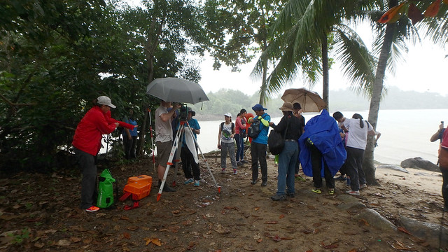 Restore Ubin Mangroves (R.U.M.) Initiative monthly walk, Dec 2016