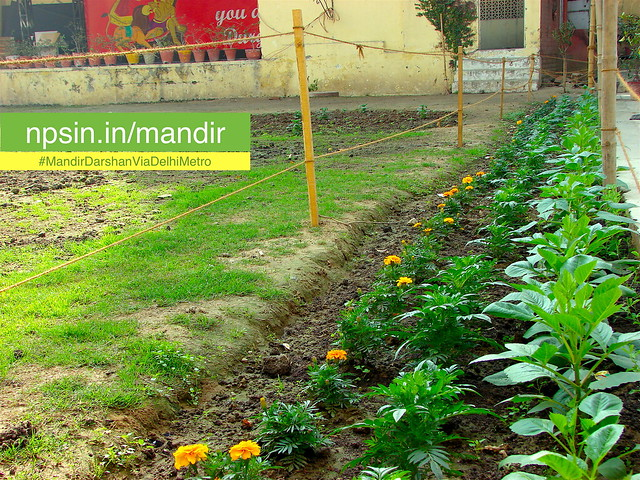 Beautiful green area with aligned rows of flower plants marigold, plantation of the campus is similar as Chittaranjan Park Kali Mandir.
