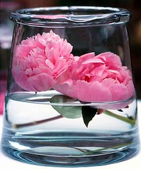 Peonies in vase | by Loua