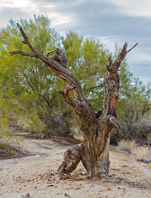 Tree-11-7D1-010717