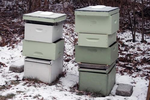 empty hives IMG_6462