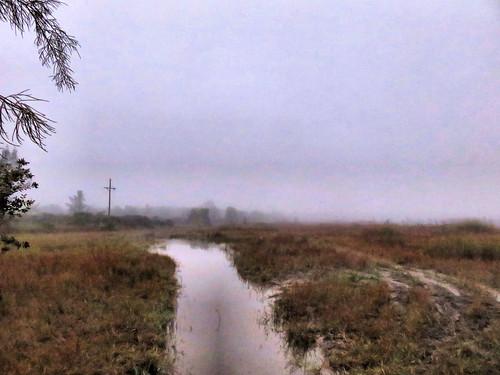 Foggy wet prairie 20170106