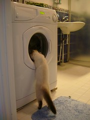 kitten & a washing machine