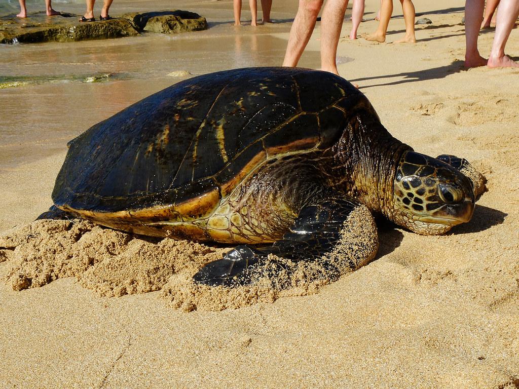 Ho'okipa Beach à Maui, Hawaï