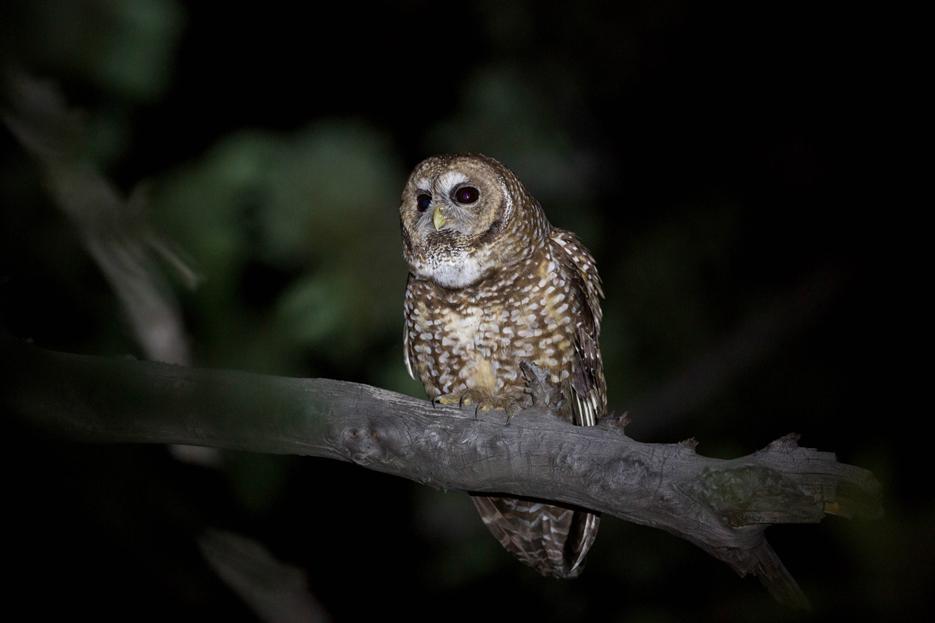 051416_owl23