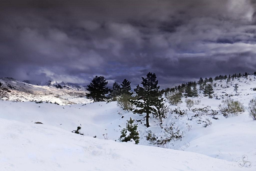 Winterland IV