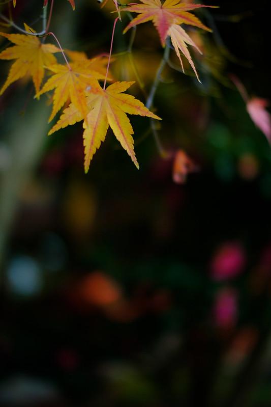 Late autumn indication of Saidaiji-temple (Nara, Japan)