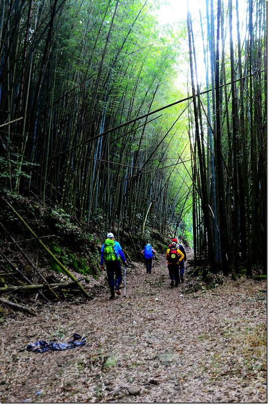 卓武山孟宗竹林登山步道
