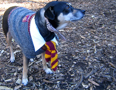 harry potter dog | by istolethetv