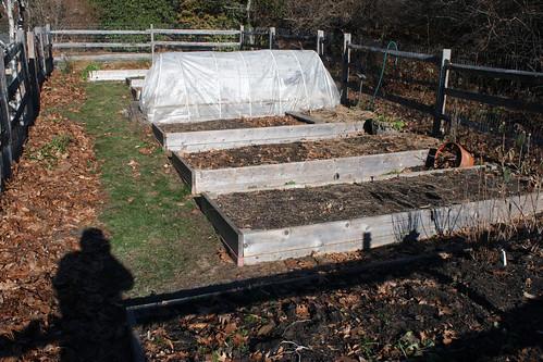 backyard garden IMG_6129