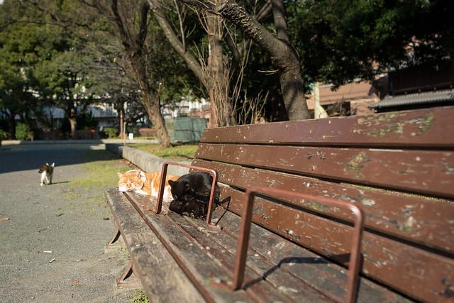 公園のベンチでくつろぐネコの写真