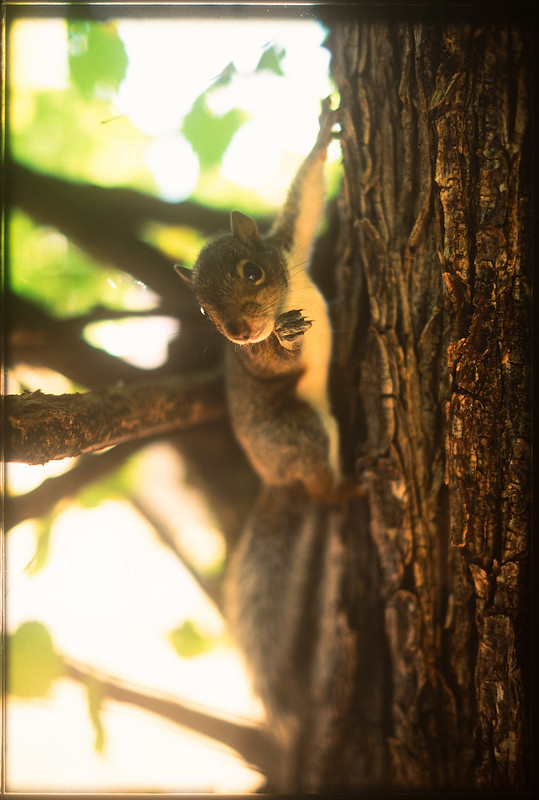 baby squirrel velvia