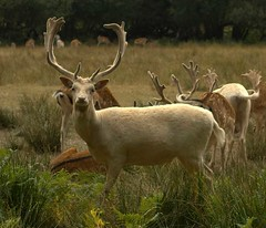 The White Buck | by Lucy in London