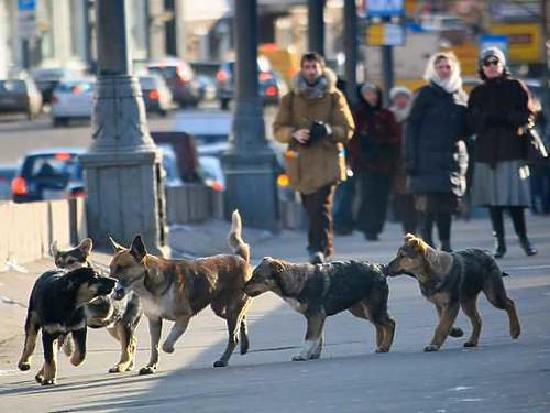Усіх собак — на реєстрацію