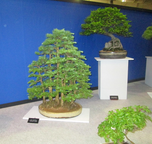 Bonsai Again Gardening Scotland 2016