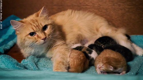 momma guarding