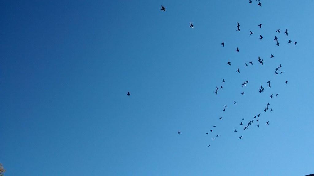 volée d'oiseaux