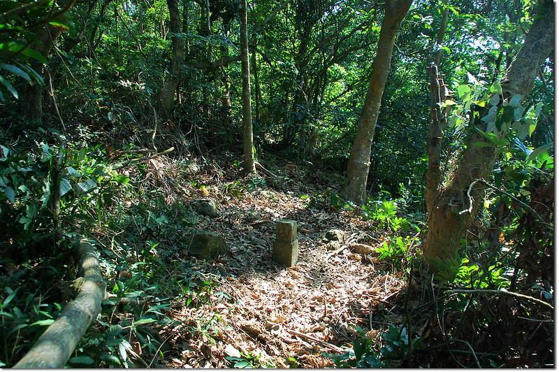 新寮山山字森林三角點
